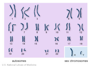 figure 1; 23 pairs of Human Chromosomes